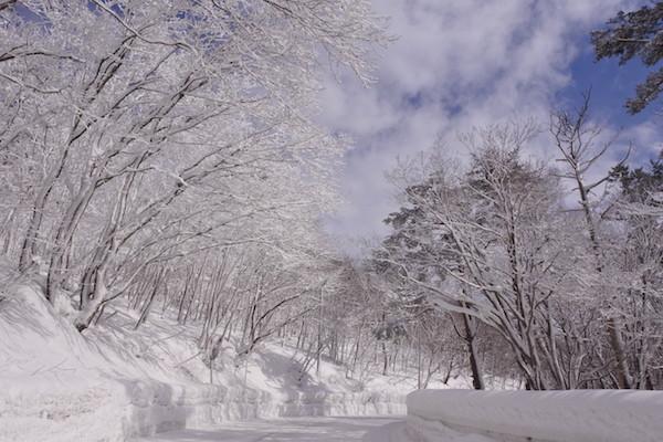 青空と雪化粧した枝の風景が美しい