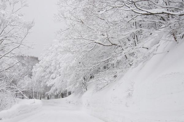 白い枝がとても綺麗