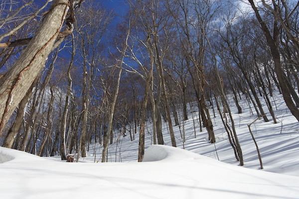 晴天で雪の林の中はとても綺麗な風景