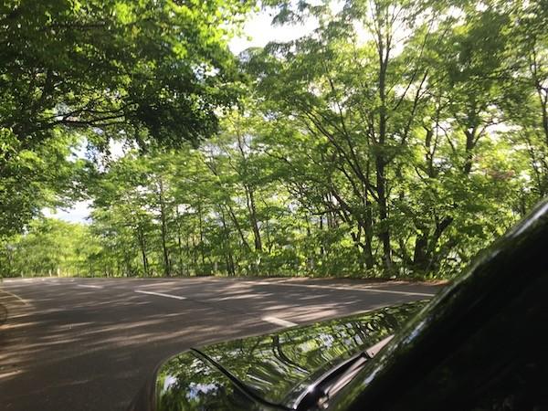 木漏れ日を浴びながら十和田湖畔を走る