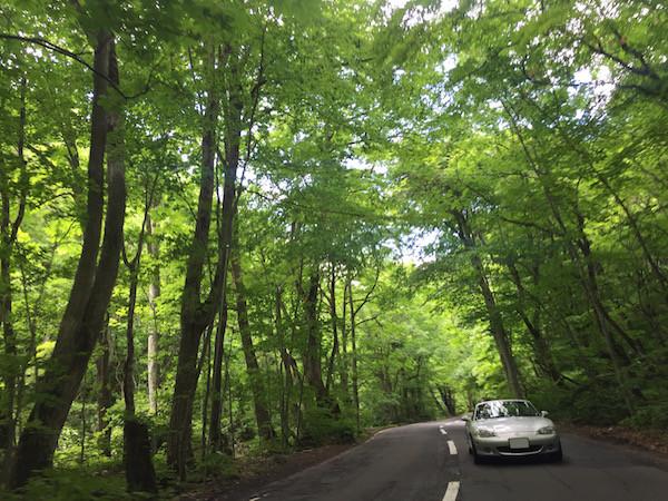 森の青さも木漏れ日の輝きも、