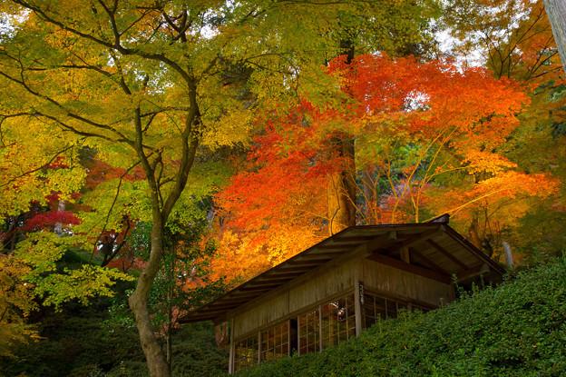 大興善寺のライトアップ♪?