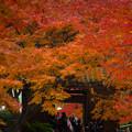 大興善寺の紅葉♪
