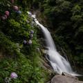 写真: 見帰りの滝と紫陽花♪