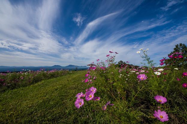 写真: 阿蘇涅槃像と秋桜♪