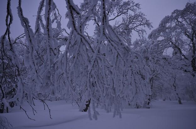 Photos: プチ樹氷