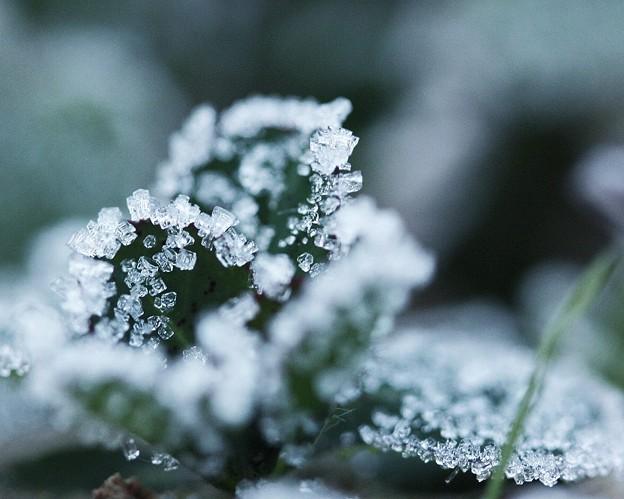Photos: 四角い結晶