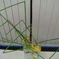 写真: ガラス花器にいける(上から)
