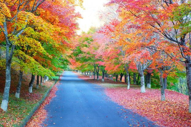 錦秋の散歩道