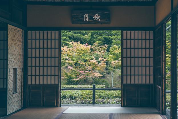写真: 桂離宮