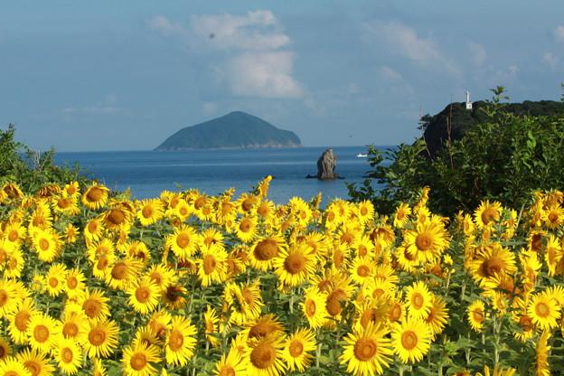空と海と向日葵