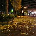 写真: 夜の並木坂