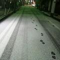 写真: 雪の日の路地