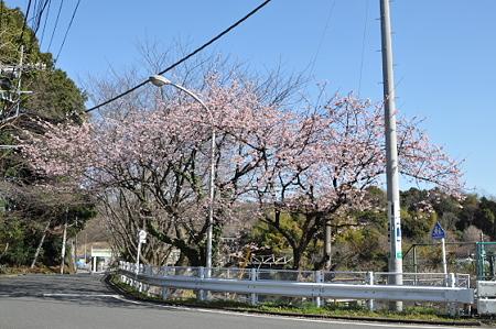 東戸塚の桜 03