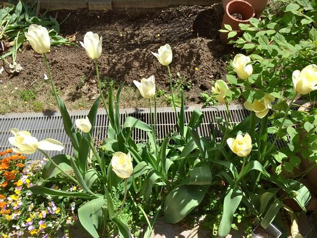 わが家の庭