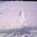 写真: 雪景色なう