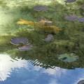 写真: なもないいけ(モネの池)^0^♪
