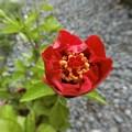 写真: もう咲きます~か~^0^♪