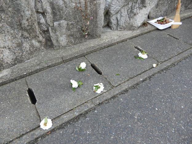 2018.1.20 山茶花の花切り