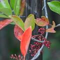 紅葉と赤い実