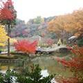 色鮮やかな薬師池公園の紅葉