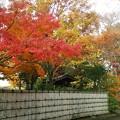 Photos: 相模原公園の紅葉