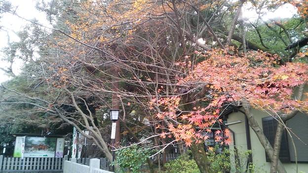京都・長岡天神(1)