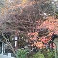 Photos: 京都・長岡天神(1)