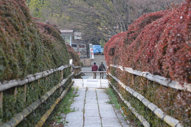 京都・長岡天神(3)