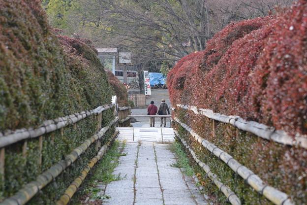 Photos: 京都・長岡天神(3)