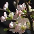 綺麗に咲いたお花