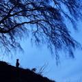 写真: 桜とお地蔵さんと月。。