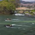 写真: あ~ぁ 川の流れのように~♪