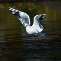 写真: 飛ぶユリりん