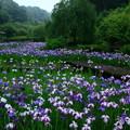 写真: 西山荘 ~ 西山の里・桃源の花菖蒲