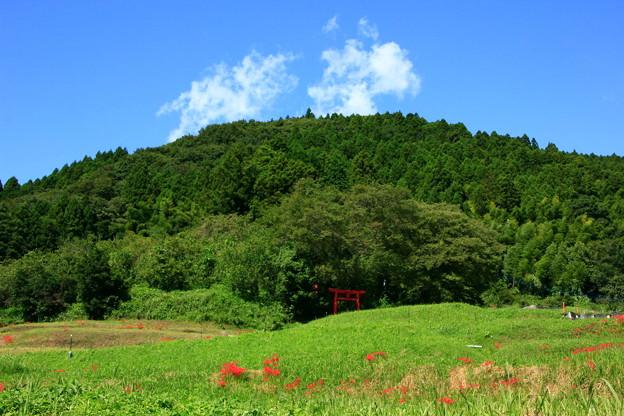 写真: 470 油ヶ崎の棚田