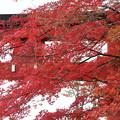 26.11.15志波彦神社鳥居付近の紅葉