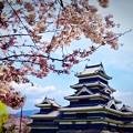 写真: 松本城