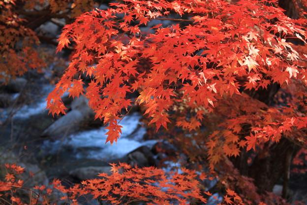 夏井川の秋