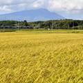 写真: 田沢湖線・秋田新幹線こまち 170924