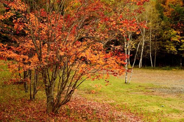 外山森林公園紅葉 171015 (4)