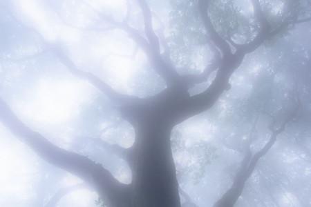 中野・江古田 バイオリン 個人レッスン ヴィオラ 吉瀬弥恵子 ワイズ音楽教室 トレモロの長さはバラバラ