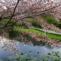 写真: まだ春の気分を