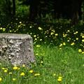 写真: 黄色い草原