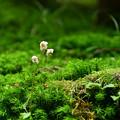 写真: 苔の森の一輪