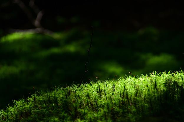 写真: 苔の楽園