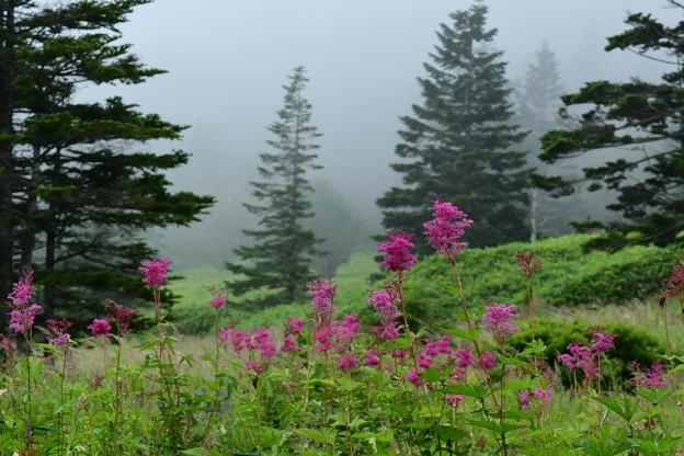 Photos: 霧に咲く