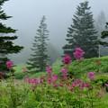 写真: 霧に咲く