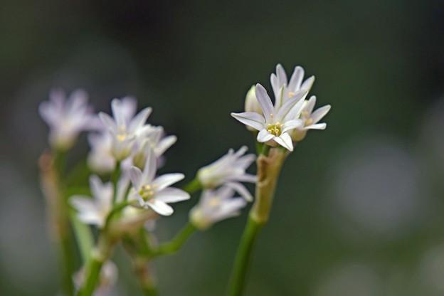写真: 木陰の白たち