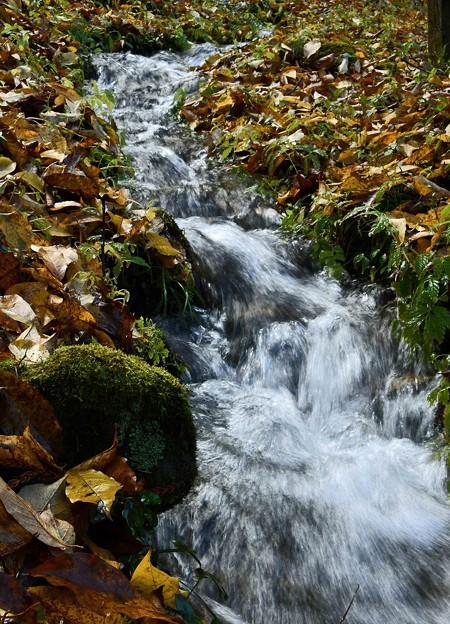 落ち葉の中の流れ